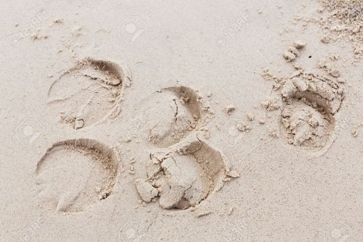48179227-Cierre-de-huellas-de-caballos-en-la-playa-pista-de-arena-Foto-de-archivo.jpg